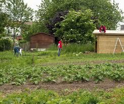 Potawal: cultiver les légumes… et le lien social